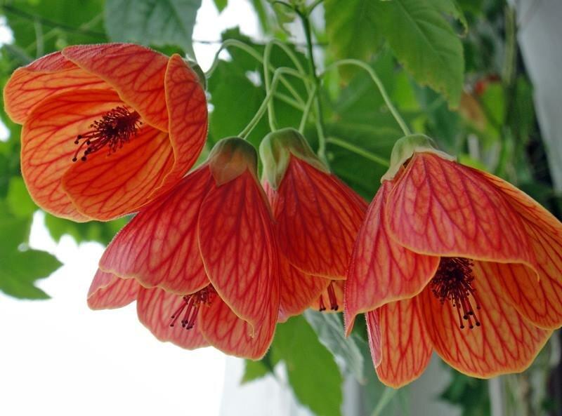 14 неприхотливых домашних растений, которые могут цвести круглый год