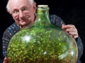 55-ти летняя традесканция в бутылке