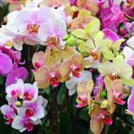 Общие требования  по уходу для орхидей