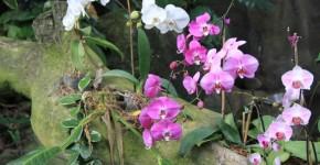 Родина орхидеи комнатной