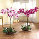 Как правильно ухаживать за орхидеей?