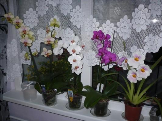 Как ухаживать за орхидеей в горшке?