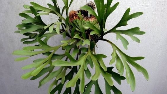 Лесные папоротники. Примеры папоротниковых растений - признаки и строение