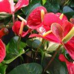 Какие цветы принесут счастье и любовь в дом: виды, описание, расположение