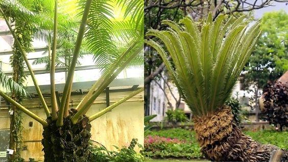 Примеры папоротниковых растений - признаки и строение