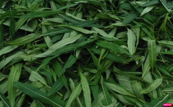 собранные листья кипрея