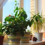 Комнатные цветы — фото и названия, каталог лучших комнатных растений
