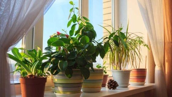 Комнатные растения каталог с фотографиями и названиями