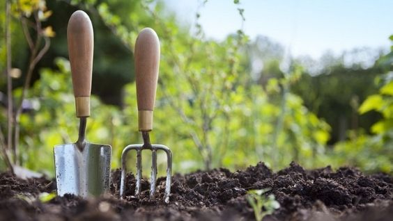 Какие цветы сажать рассадой и как это сделать