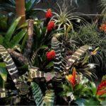 Бромелия виды с фото цветка: эхмея, гузмания, криптантус, вриезия