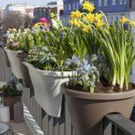 Декоративноцветущие комнатные растения с названиями и фото