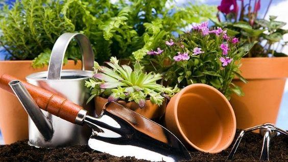 Подкормка для комнатных растений в домашних условиях