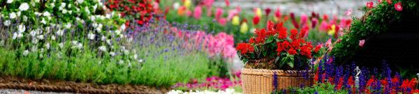 Комнатные растения - выбор и уход