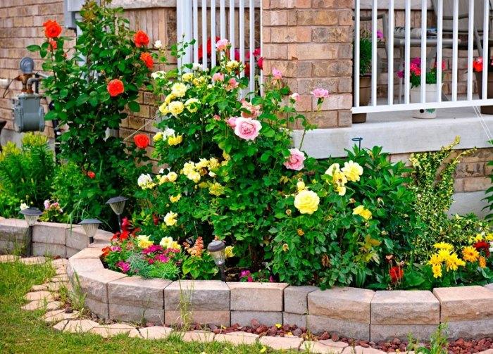 Всё о розах: виды, основные правила выращивания и ухода