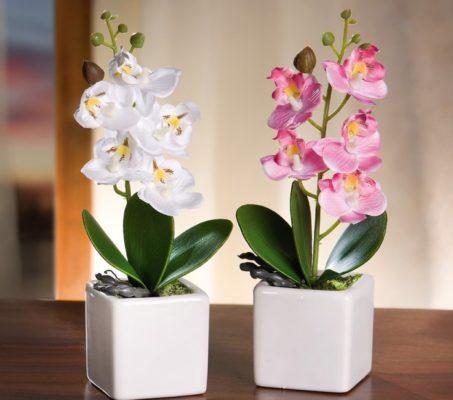 подкормка орхидей янтарной кислотой