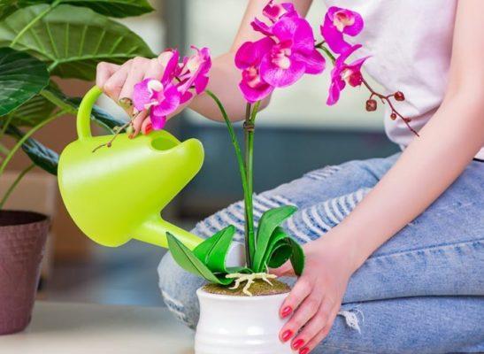 янтарная кислота для орхидей как применять
