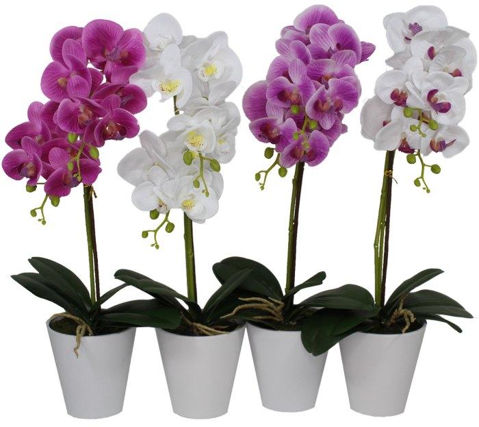янтарин для орхидей