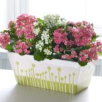 Каланхоэ лечебный: уход в домашних условиях и как выращивать лекарственное растение в зависимости от света на подоконнике, как ухаживать, чтобы добиться цветения?