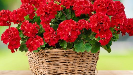 Топ 20 самых полезных комнатных растений