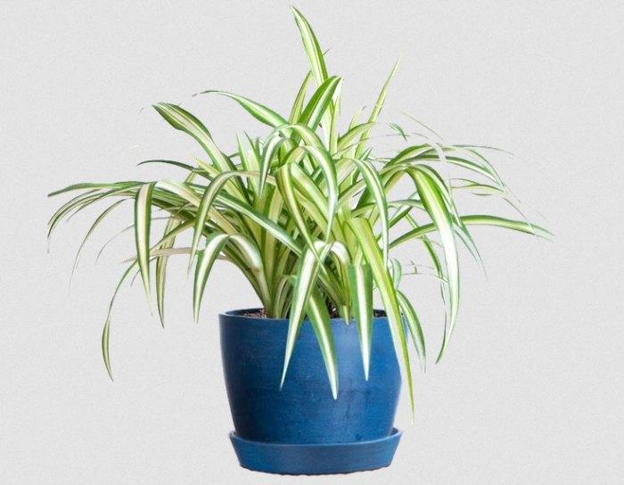 полезные растения комнатные