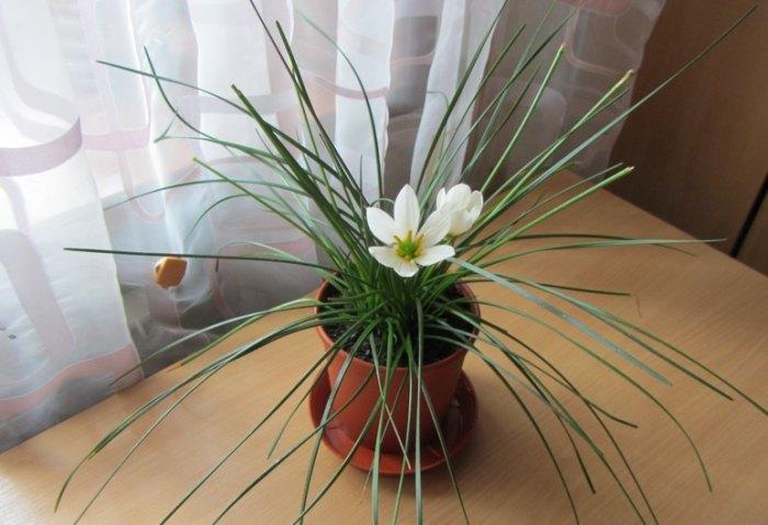 Уход за комнатными растениями во время отопительного сезона