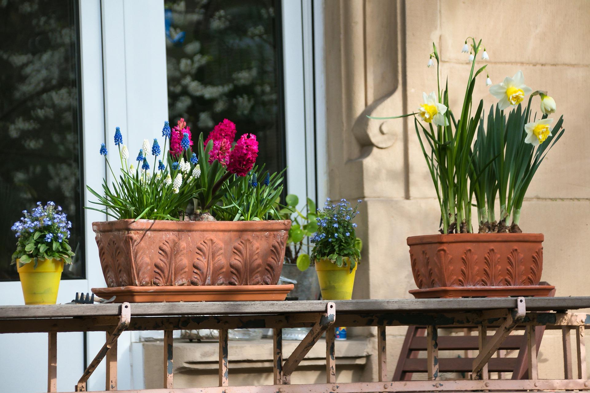 Растения для украшения дома на Пасху
