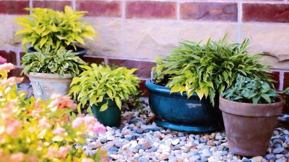 Комнатные растения в горшках для украшения участка