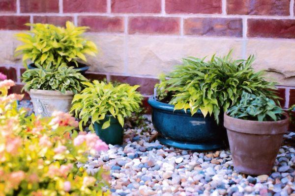 Растения в горшках на участке