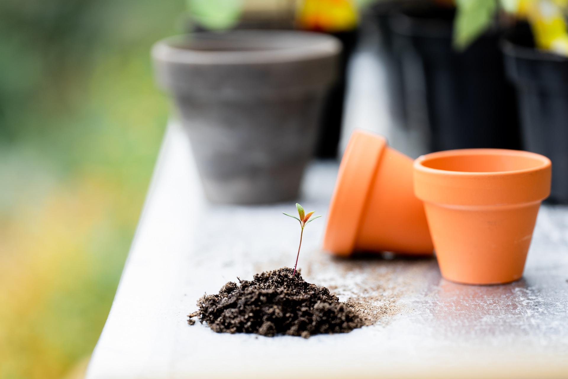 Все растения нуждаются в периодической подкормке